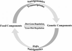 obesidad y genes