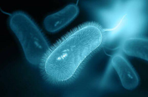 Dieta para tratar la Helicobacter Pyroli